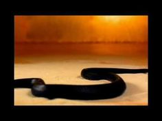 Nine Inch Nails - Gone Still/The Day The Whole World Went Away