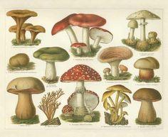 hongos comestibles dibujos - Buscar con Google