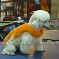 creative dog grooming school in Thailand. Dog Grooming Styles, Dog Grooming Shop, Poodle Grooming, Grooming Salon, Extreme Pets, I Love Dogs, Cute Dogs, Poodle Hair, Creative Grooming