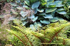 Garden Designer's Roundtable: Ideas for Adding Texture to Your Landscape - The Personal Garden Coach