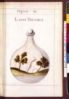 Figura IX - Lapis Tri-Unus - Sapientia veterum philosophorum, sive doctrina eorumdem de summa et universali medicina 40 hierogliphis explicata