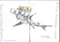 Carnet Bleu: Encyclopedia of…shark, vol.XII p10, pencil on paper by Pascal Lecocq, The Painter of Blue ®, 7x5, 2013, lec888dp10, public coll. Brooklyn Art Li...