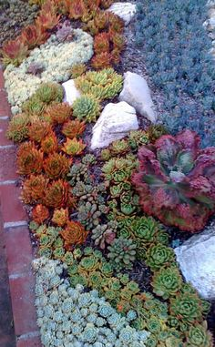 If you want to make Spring & Summer Garden Succulent Plants are the best choice. Succulents multiply easily, and you don't need to visit the nursery again to find other plants for yourself. Succulents are far more tolerant of cold than many people expect. Succulent Landscaping, Landscaping With Rocks, Front Yard Landscaping, Planting Succulents, Landscaping Ideas, Succulent Rock Garden, Succulent Plants, Pot Jardin, Low Maintenance Garden