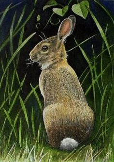 """Summer Bunny done in India ink and colored pencil. 2.5"""" by 3.5"""""""