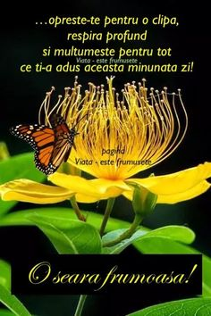 Spiritual Quotes, Spirituality, Fruit, Plants, Spirit Quotes, Spirituality Quotes, Spiritual, Plant, Planets