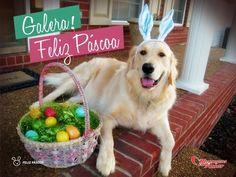 Feliz Páscoa familiares e amigos, período de renascimento. Beijos e abraços!