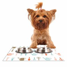"""afe images """"Gardening Tools Pattern"""" Teal Abstract Dog Place Mat"""