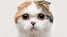 Sim, os gatos têm emoções. Aqui estão 20, em fotografias - Observador