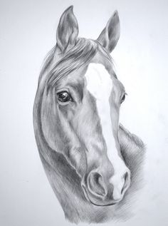 Images For > Wild Horse Drawings In Pencil