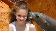 Pasa un día nadando entre focas marinas, unos divertidos y cariñosos mamíferos marinos que te besarán y abrazarán a cambio de un rico tentempié.