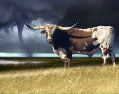 Texas longhorn and tornado Longhorn Cow, Longhorn Cattle, Cow Pictures, Animal Pictures, Wooly Bully, Cowboy Up, Cow Art, Texas Longhorns, Le Far West