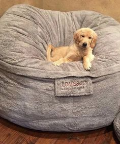 Want a lovesac in my living room