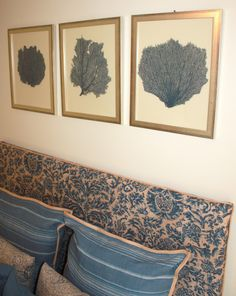 Painted and Framed Sea Fan Collections...