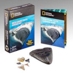 NATIONAL GEOGRAPHIC Shark Tooth Dig Kit | SHARK TOYS | Shark