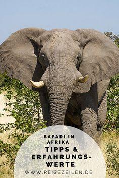 Meine wichtigsten Tipps und Erfahrungswerte, was man auf Safaris beachten sollte (und wie man dafür packt). #Afrika #travel #wildlife