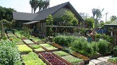 Família Dervaes planta e colhe o próprio alimento em um terreno de 370 m² na Califórnia, Estados Unidos. Foto: The Urban Homesteaders / Di...