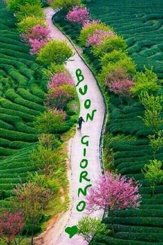 Buona Giornata Immagine #Immagine #2120, #2120 #buona #giornata #immagine Morning Greetings Quotes, Sunset Wallpaper, Happy Words, Good Morning Good Night, Cute Pins, Beautiful World, Pathways, Shabby Chic, Gifs