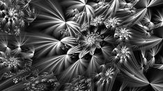 Interesting spiral image with radiating imagery Fractal Art, Fractals, Worlds Largest, Spiral, Deviantart, Black And White, Artist, Plants, Image