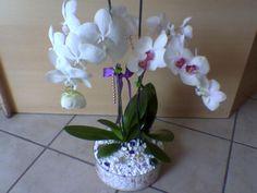 Hanımlar yine harika fikirlerle sizlerleyim. Bu defa da orkide çiçeğini nasıl çoğaltacağımızı öğreneceğiz. Evde kendiniz orkidenizi yetiştirin. [gallery columns=