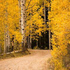 Aspen road by debcoimages