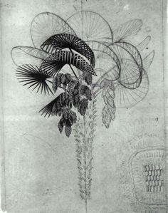 Palm Tree sketch - M.C. Escher