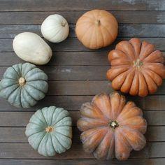 Decorating your doorstep (Fall Pumpkins)