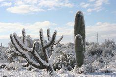 Snow in our Arizona Snow In Arizona, Desert Snow, Snow Coming, Living In Arizona, Cactus Plants, Cacti, Palm Trees, Winter Wonderland, Succulents
