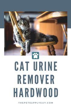 Cat Urine Remove for Hardwood Furniture BestCat Urine Remove for Hardwood Furniture (Buying Guide) Dog Crate Cover, Diy Dog Crate, Cat Urine Smells, Dog Smells, Dumb Cats, Bad Cats, Hardwood Furniture, Cat Furniture, Cleaning Cat Urine