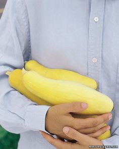 How to grow Yellow squash.