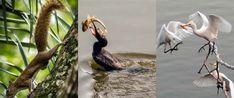 Noticias de Santa Cruz, Bolivia Bolivia, Fauna, Bird, Animals, Santa Cruz, Squirrels, Birds, Photos, News