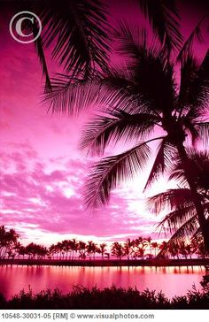 Pink Sunset with Palm Tree's Nice