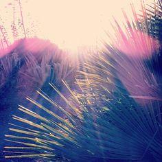 #landscape #light #flora #almeria #sanjose #beach Playa De Los Genoveses