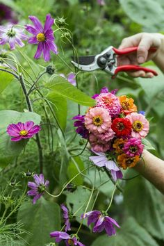 Zinnias make for beautiful cut flowers. Makes a colourful bouquet. Growing Flowers, Growing Plants, Love Flowers, Table Flowers, Flowers Garden, Beautiful Flowers, Ed Wallpaper, Herbaceous Border, Love Garden
