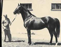 Nearctic, sire of Northern Dancer