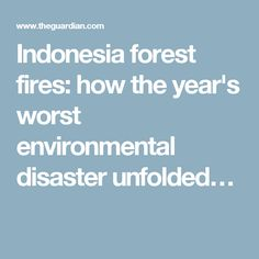 Indonesia forest fires: how the year's worst environmental disaster unfolded…