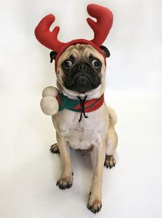 Funny Xmas Dog Pictures