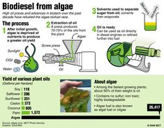 Biodiesel from algae?  Algae can be grown just about anywhere temperatures are warm enough, and it can even be grown in waste water (helping to digest municipal waste on land that is already being used for that purpose). It does not need to compete with farmland for usable space, either. As a matter of fact, some algal systems have been used in a desert environment. Read more...