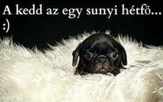 . Baby Animals, Funny Animals, Baby Pugs, Funny Memes, Jokes, Pug Pictures, Horse Portrait, Animal Photography, Haha