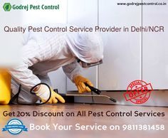 Avail FLAT 20% OFF on all Pest Control Services in Noida, Delhi/Ncr from GPC-9811381458 https://godrejpestcontrolc.wordpress.com/2017/01/25/your-home-is-your-castle-and-protecting-it-from-pest-means-having-the-best-protection-get-best-pest-control-services-from-godrej-pest-control-9811381458/ #pestcontrol #termitetreatment #noida #delhi #faridabad #ghaziabad