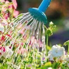 Como regar as plantas na primavera