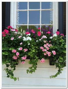 Love the lush ivy used with the pretty pink blooms in this window box Modern is part of Container gardening flowers Love the lush ivy used with the pretty pink blooms in this window box Love the lu - Window Box Plants, Window Box Flowers, Window Planter Boxes, Planter Ideas, Window Boxes Summer, Railing Flower Boxes, Balcony Window, Container Flowers, Container Plants