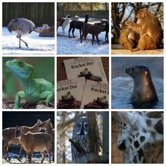 Ausflugtipps: Winterbesuch im Zoo Schon oft hörten wir wie schön ein Winterbesuch im Zoo ist. Jetzt haben wir uns selbst überzeugt und gleich vorne weg: es war wunderschön!