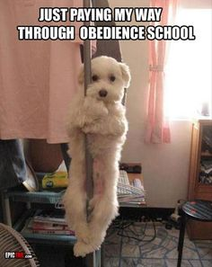 dog training funny pictures - http://ebooks2buy.biz/go/FunnyJokes.php