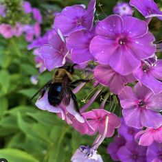 It is not how busy you are, but why you are busy — the bee is praised, the mosquito is swatted. -Author Unknown