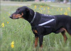 Coupon activedogs.com