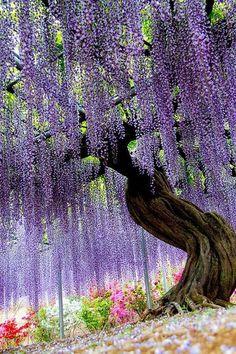 日本 足利花卉公園
