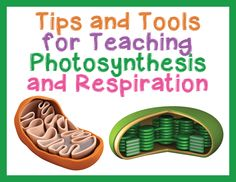 Tips and Tools for Teaching Photosynthesis and Respiration in High School Biology – Science and Math with Mrs. Lau Source by laubethany Biology Lessons, Science Lessons, Science Education, Life Science, Physical Science, Forensic Science, Science Books, Earth Science, Science Experiments