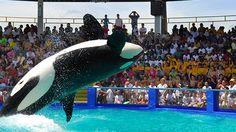 Golfinhos, baleias, leões-marinhos, tartarugas, peixes-boi... o Miami Seaquarium é incrível! http://www.weplann.com.br/miami/ingressos-seaquarium