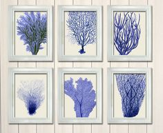 Set 6 Blue Coral Prints Nautical print sea picture by NauticalNell, $55.00