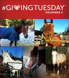This GivingTuesday, please consider making a donation to help us continue our work saving slaughter-bound equines and finding them new, loving homes <3 Click here to learn what your gift can do for horses in need: http://www.jmacresrescue.com/rescue-blog/this-christmas-give-a-gift-that-keeps-on-giving
